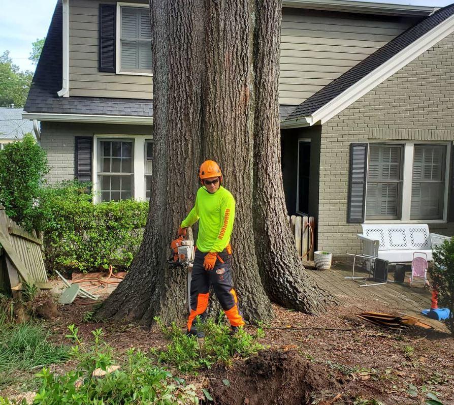 Arbormax-tree-service-kansas-city-big-oak-tree-removal
