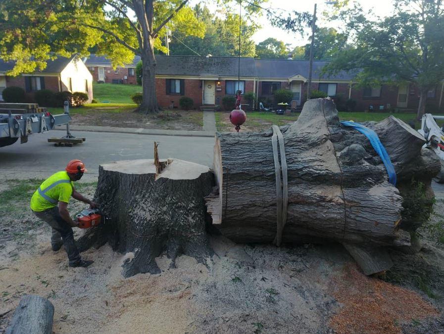 Arbormax-tree-service-kansas-city-tree-removal-professionals