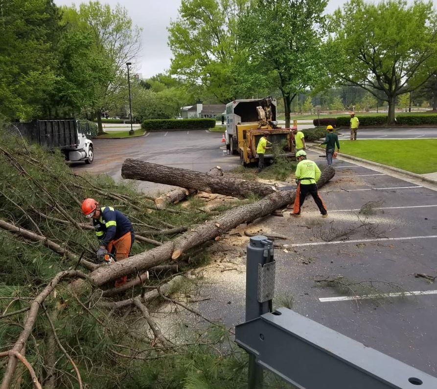 Kansas-city-tree-service-3