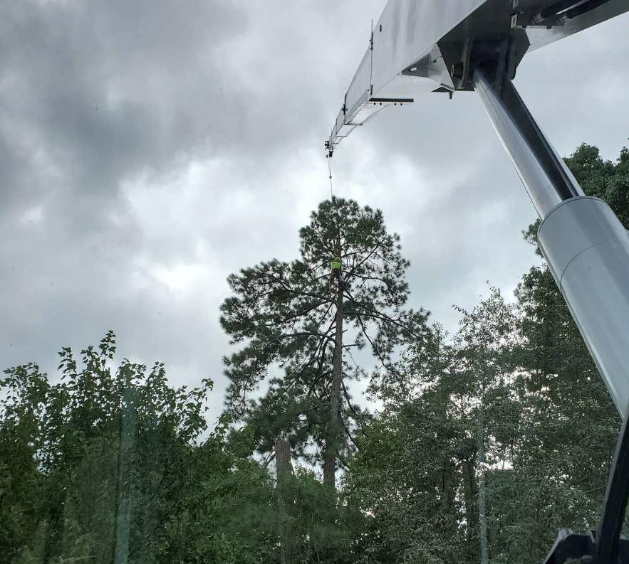 arbormax-tree-service-kansas-city-cutting-trees-with-crane