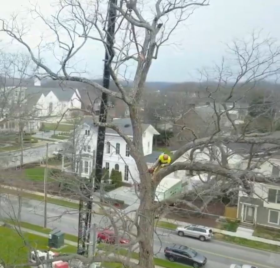 kansas-city-tree-removal