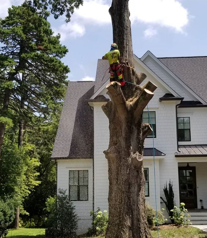 kansas-city-tree-service-4-tree-removal