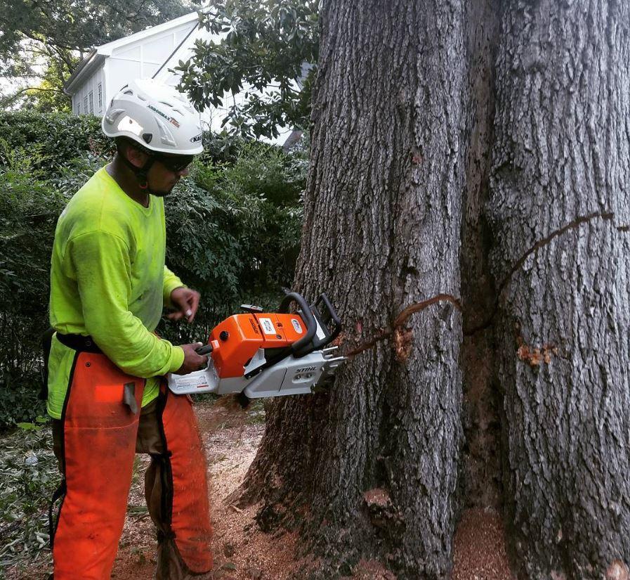 kansas-city-tree-service-gallery-large-tree-removal