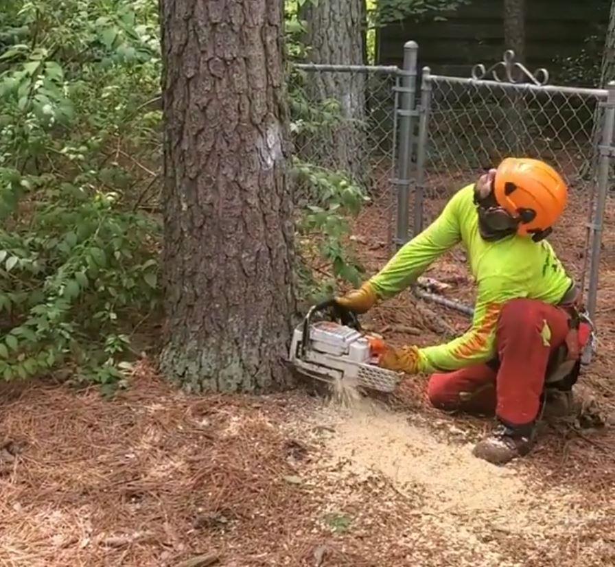 kansas-city-tree-service-gallery-professional-tree-removal