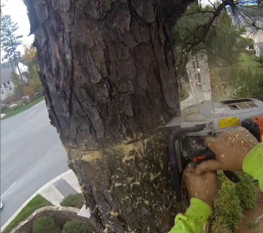 kansas-city-tree-service-gallery-removal