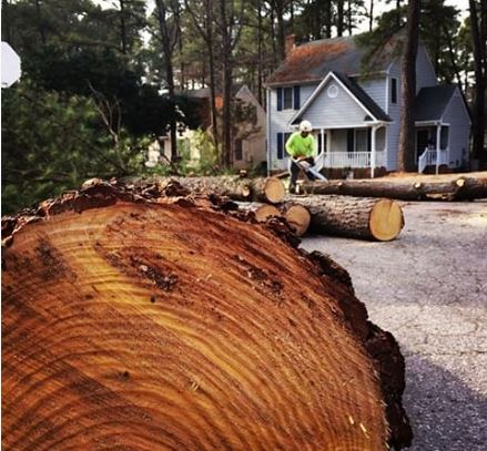 kansas-city-tree-service-gallery-tree-removal-service