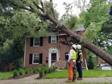 fallen-tree-Arbormax-tree-service-KANSAS-CITY