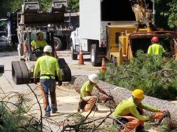 kansas-city-tree-service-2
