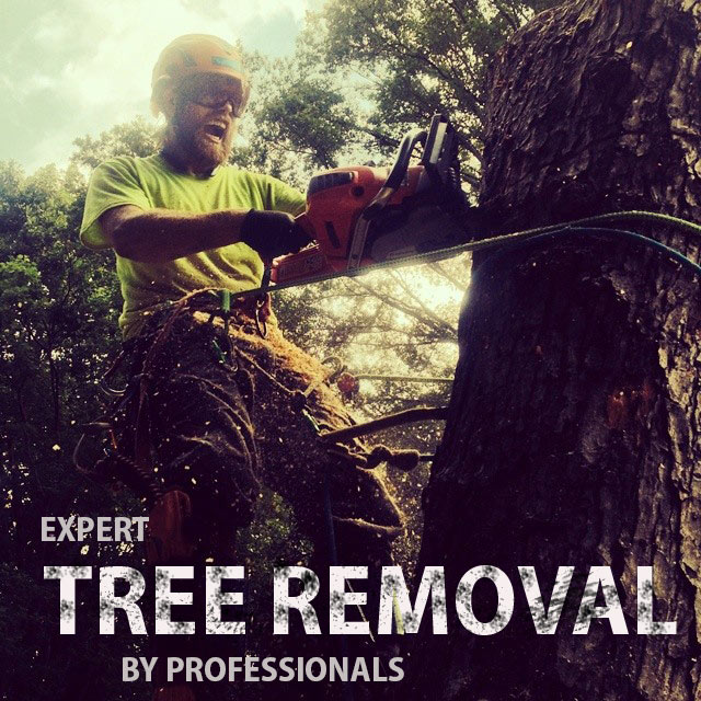 EXPERT-TREE-REMOVAL