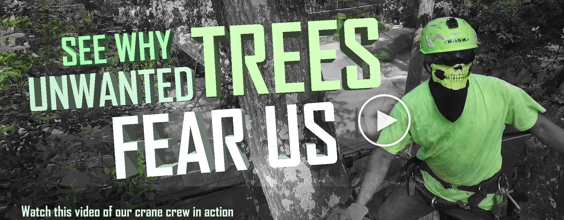 SEE WHY unwanted trees fear us
