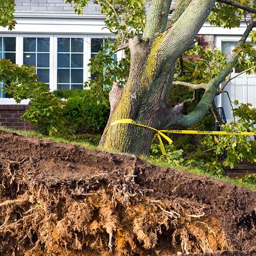 Emergency Tree Removal