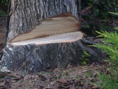 step2-tree-removal