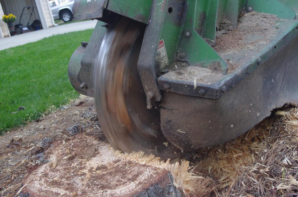 Stump Grinding Service Kansas City