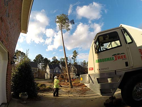 tree-service-raleigh-85