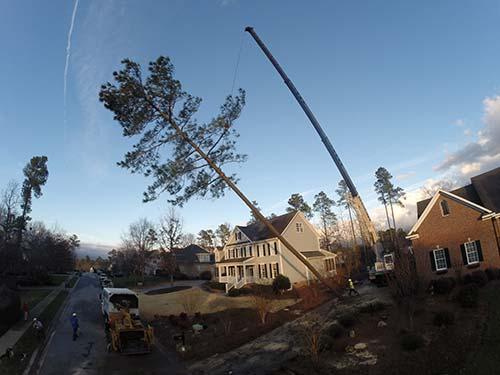 tree-sewrvice-raleigh-89
