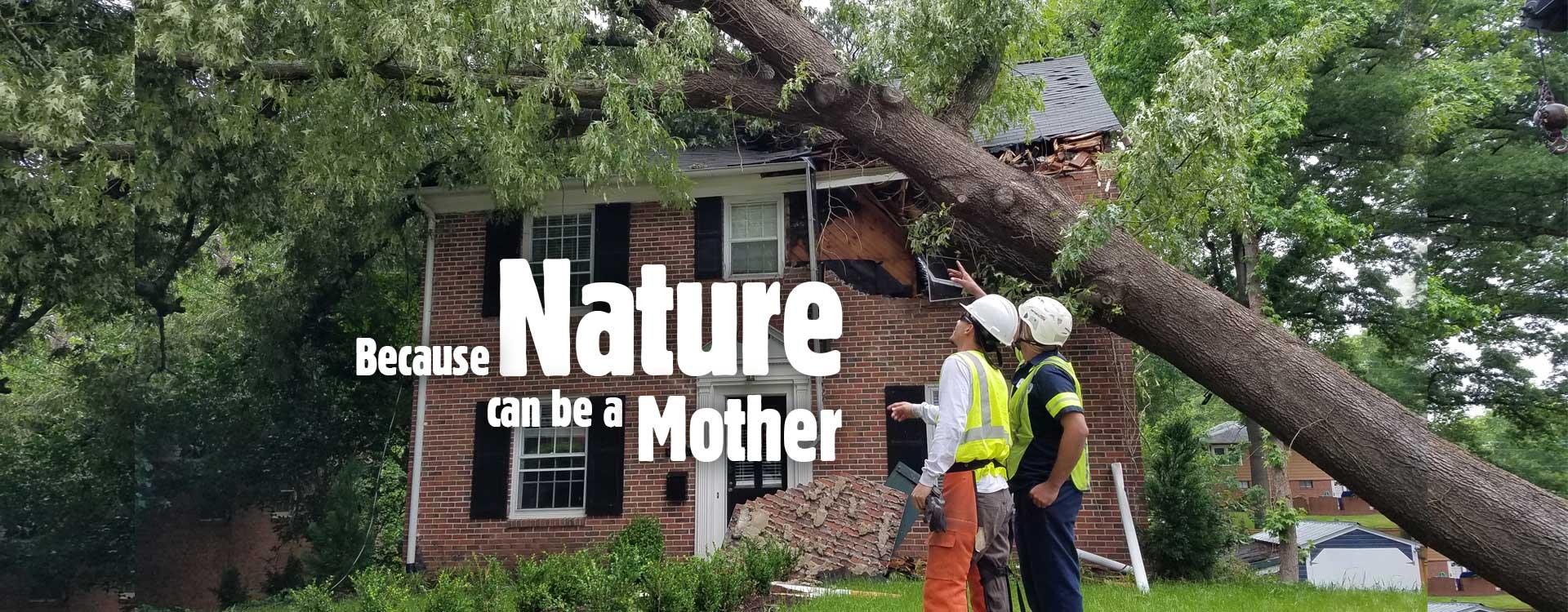 Kansas City Tree Care