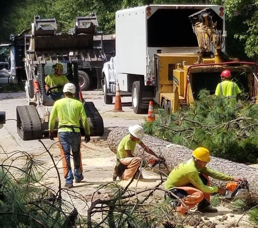 Arbormax tree service kansas city crew tree care